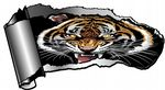 Ripped Open Gash Torn Metal Design With Beautiful Bengal Tiger Motif Vinyl Car Sticker 140x75mm